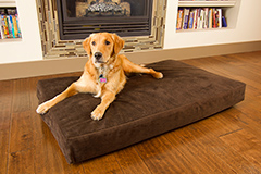 Mattress Mill Pet Bed in Brown