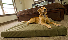 Mattress Mill Pet Bed in Green
